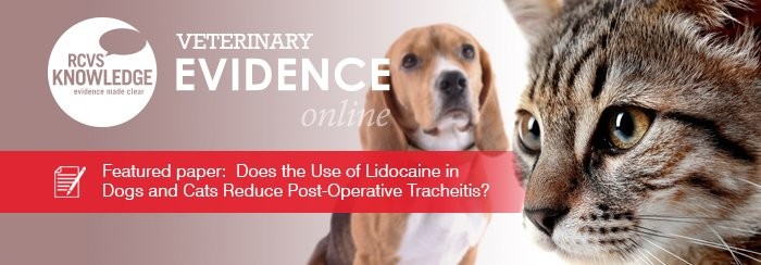 Featured paper: Does the Use of Lidocaine in Dogs and Cats Reduce Post-Operative Tracheitis?