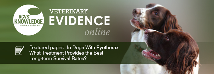 Featured paper: In Dogs With Pyothorax What Treatment Provides the Best Long-term Survival Rates?