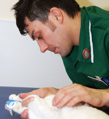 What kind of college classes would i need to take to become a vet?