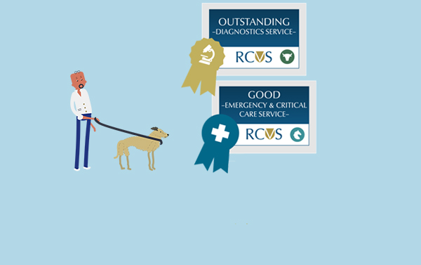 Graphic of pet owner viewing different awards