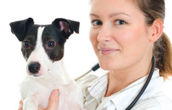 Veterinary surgeon with dog