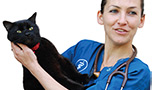 Veterinary surgeon holding a cat