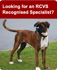Looking for an RCVS Recognised Specialist?