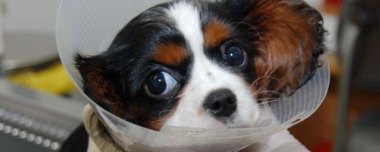 Puppy patient