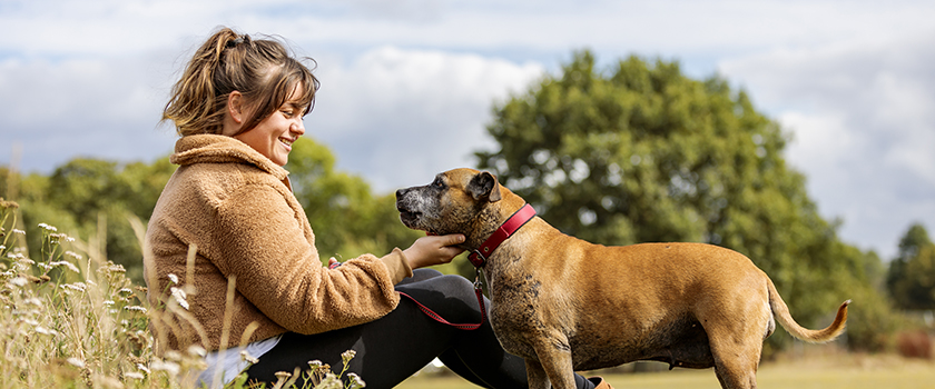 Scout and Roo Bear are featured in the Your Kind of Vet digital Practice Standards Scheme campaign