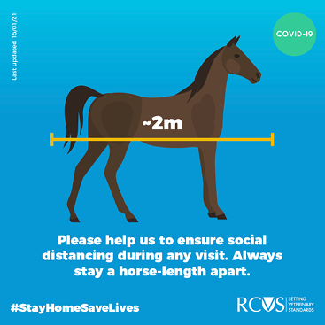 Instagram card - Always stay a horse-length apart