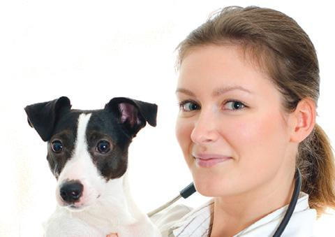 Female veterinary surgeon with dog