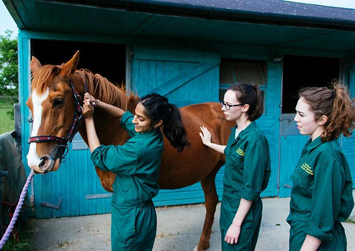 Veterinary students - Professionals